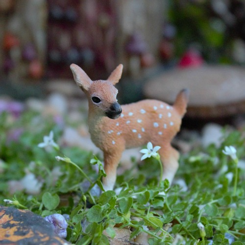 little fawn - Garden Animals