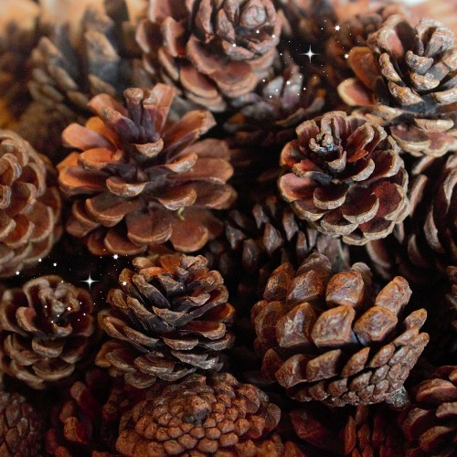 Mini Pine Cones – Garden Sparkle