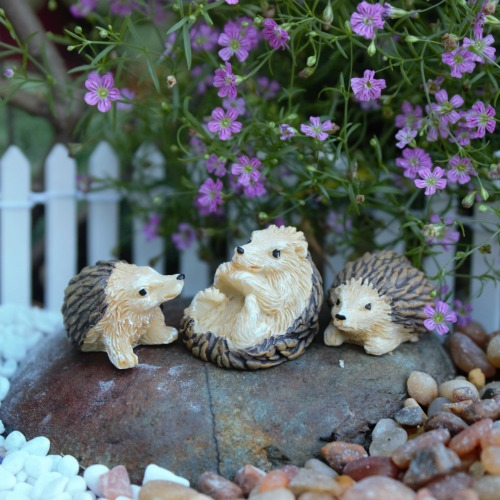 Hedgehog Family – Miniature Hedgehogs