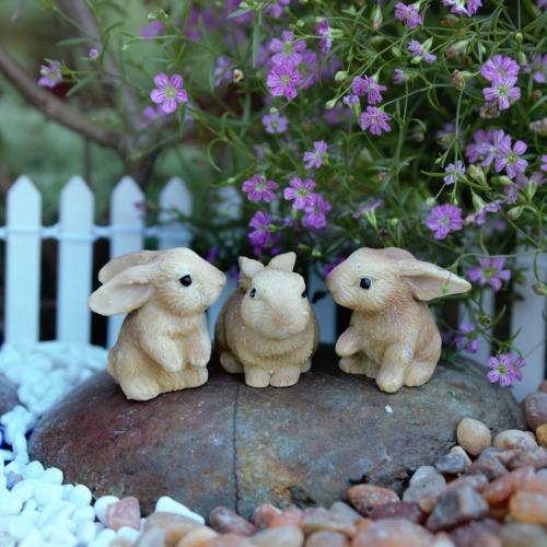 Miniature Bunny Rabbits – Rabbit Family
